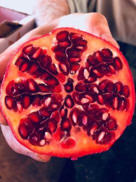 pomegranateflowerjan.7