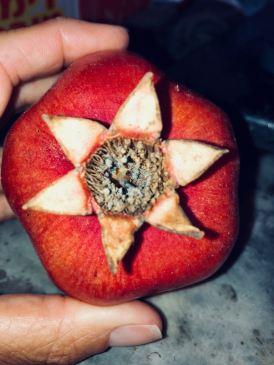 pomegrantestarjan.7